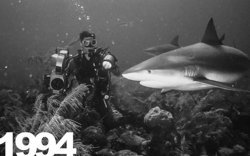 Bullenhaie auf den Bahamas